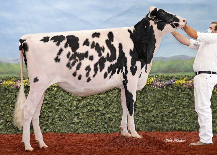Blondin Denver Cosmic | Daughter of 94HO18518 Denver | Owned by Veldman Farms