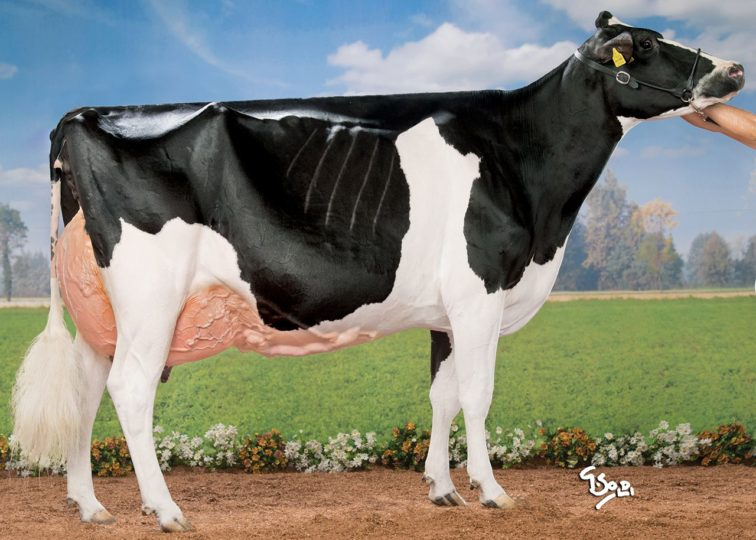 Hallow Atwood Twizzle, EX-93 | Dam of 94HO18659 Twizzle