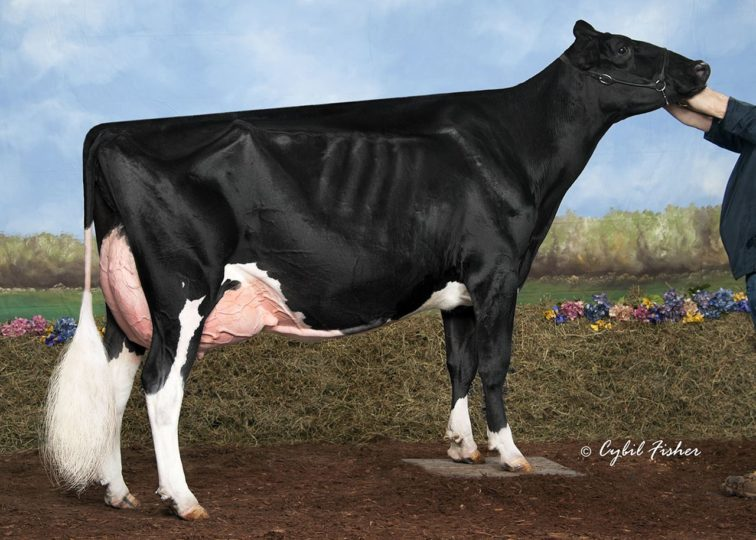 Butz-Butler Gold Barbara-ET, EX-95 | Dam of 94HO17775 Bachelor