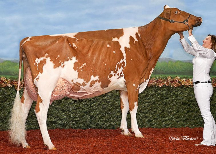 Blondin Destry Sally-Red-ET, EX-93 | Daughter of 94HO13666 Destry*RC | Grand Champion, RWF R&W Show 2014 | Owned by Ferme Blondin & Dupasquier