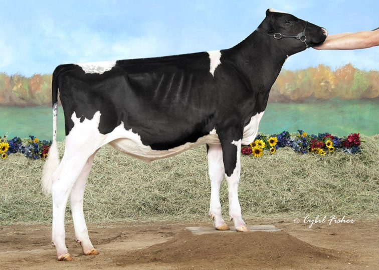 Smith-Crest Daniel Iris | Daughter of 94HO17993 Daniel*RC | Owned by Mia Smith