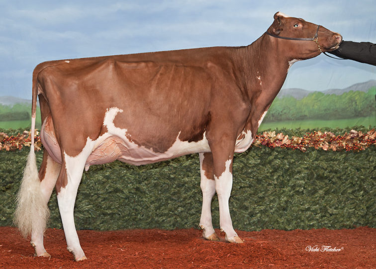 Miss Hot Mama-Red-ET, EX-92 | Maternal Sister to 94HO17973 Hypnotic*RC | Holstein Association USA's 2016 Star of the Breed