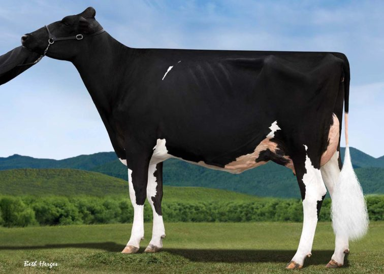 Fountain-Farm Declan Melody, VG-87 | Daughter of 94HO16496 Declan | Grand Champion, PA South-Central Championship Holstein Show 2016 | Owned by Harry & Aliene Thompson