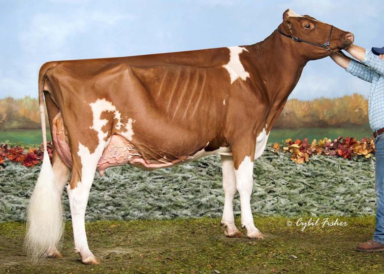 Liddleholme Alice-Red-ET, VG-89 | Daughter of 94HO16187 Heztry*RC | Grand Champion, The Big E Red & White Show 2016 | Owned by Mike Garrow