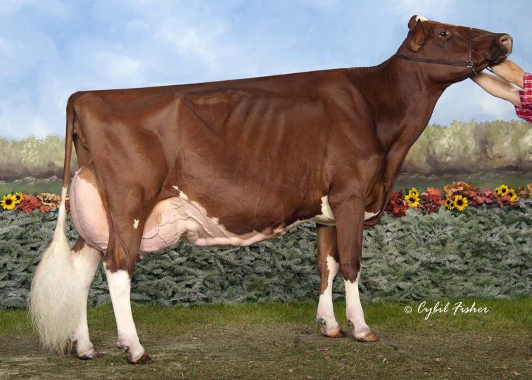 KHW Regiment Apple-Red-ET, EX-96 3E | Dam of 94HO0901 Akito-Red