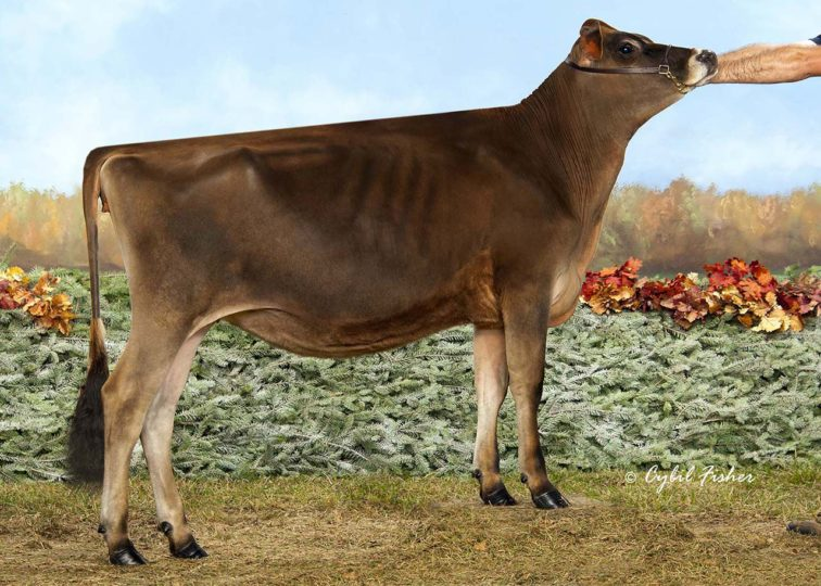 Dream-Valley Billing Thousands | Daughter of 94JE3986 Billings | 1st Summer Yearling, International Jersey Show 2017 | Owned by Michael Bosley