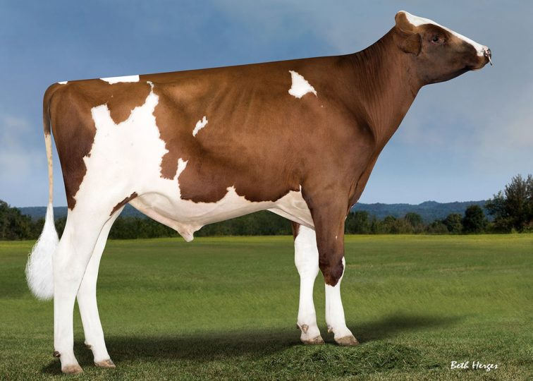 94HO0909 Fusion-P-Red | Addiction-P-Red x Absolute-Red x Advent-Red x Rubens*RC