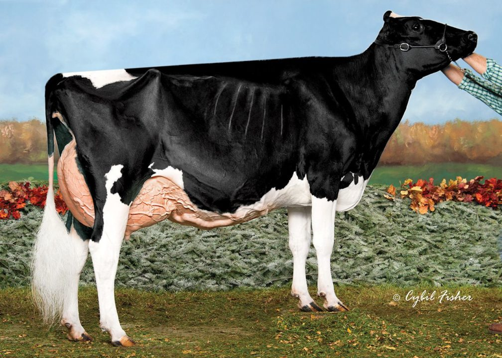 Butlerview Aftersh April-ET, EX-95 | Daughter of 94HO14105 Aftershock | HM Grand Champion, Grand National Jr Holstein Show 2014