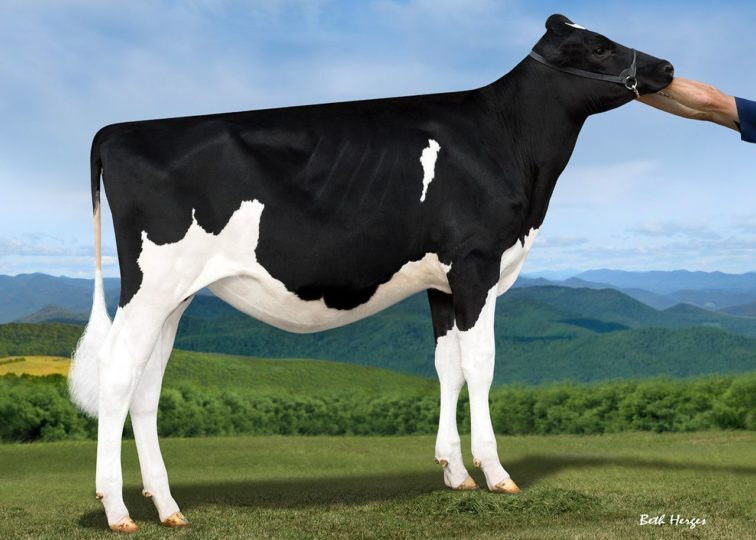 Savage-Leigh Daniel Abbott | Daughter of 94HO17993 Daniel*RC | Owned by Jeremy McChesney
