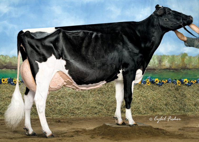 Rainyridge Talent Barbara*RC, EX-95 | 3rd Dam of 94HO18095 Bailey*RC