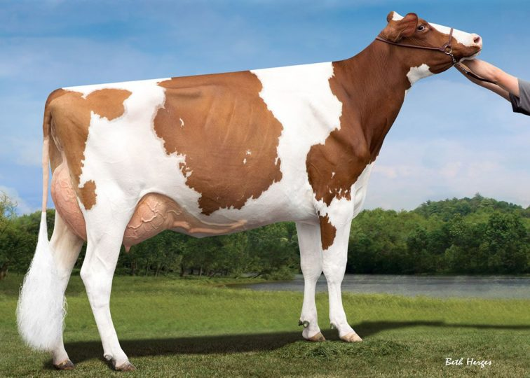 Morrill Heztry Clover-Red, EX-92 | Daughter of 94HO16187 Heztry*RC | Owned by Grady & Lane Wendorf
