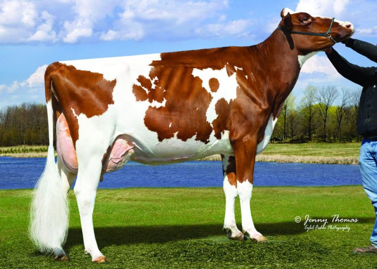 Miss California-Red, EX-93 | Dam of 94HO0898 California-Red