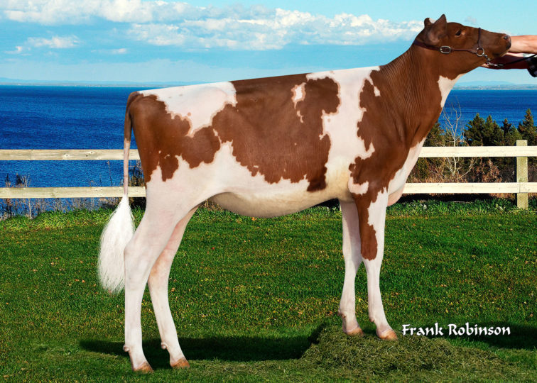 Ruann-Gr Doncha-Wish-Red-ET | Daughter of 94HO0910 Aristocrat-Red | Owned by Amelia Borba