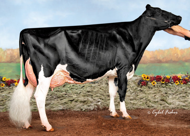 Tuytel Atwood Barbra-ET, EX-94 | Dam of 94HO18921 Bentley-P
