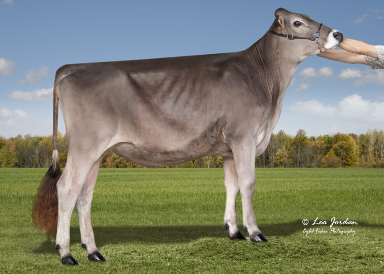 RAD-ical P Wishful Thinking | Daughter of 94BS3818 Phantom | Owned by RAD-ical Genetics