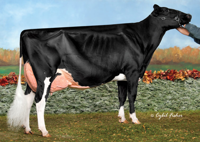 Butz-Butler Gold Barbara-ET, EX-96 3E | 3rd Dam of 94HO18921 Bentley