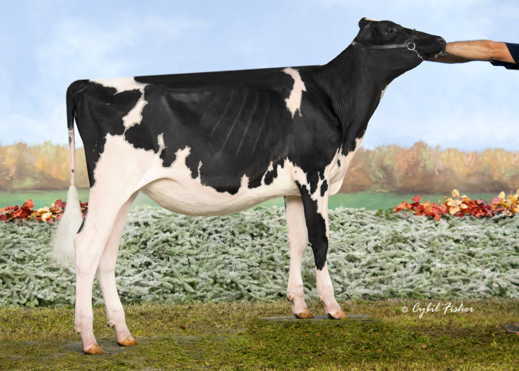 Vandoskes Denver Cami-ET | Daughter of 94HO18518 Denver | Bred & Shown by Brianne, Brooklyn & Reid Vandoske | Owned by Quality, Beckridge, Agriber, & Wright