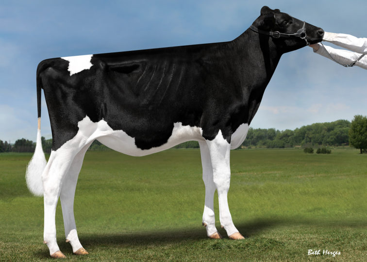 Bert-Mar Twizzle Bonbon | Daughter of 94HO18659 Twizzle | Owned by Allan & Erica Lundberg