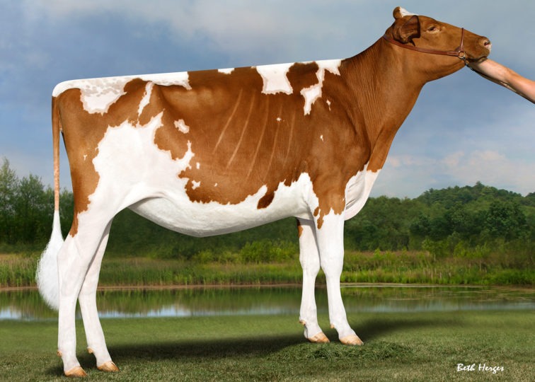BHHD Claim To Fame-Red-ET | Daughter of 94HO0910 Aristocrat-Red | Owned by M, M & M Price & H & H McIsaac