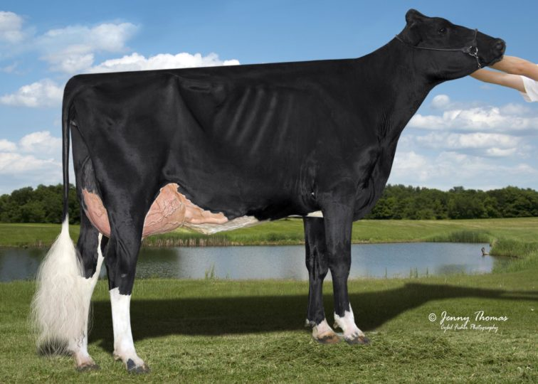 Morrill O Kaffeine 3641-ET, VG-88 | Daughter of 94HO17295 O'Kaffeine | Owned by Morrill Farm Dairy LLC