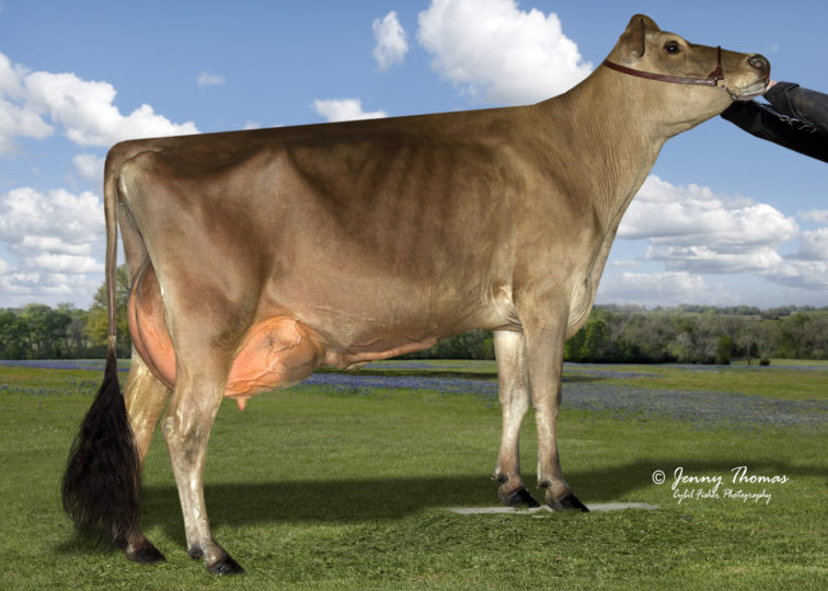 Fireman Breeze Bubble, 85% | Daughter of 94JE4004 Fireman | Owned by Williams Jerseys