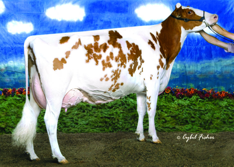 Dyks Kite Linda-Red-ET, EX-95 | Maternal sister to 4th dam of 94HO0914 Aflame-Red