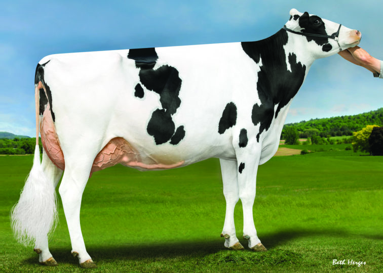 Kings-Ransom Montry Cans-ET, EX-93 | Dam of 94HO19123 Conclusion