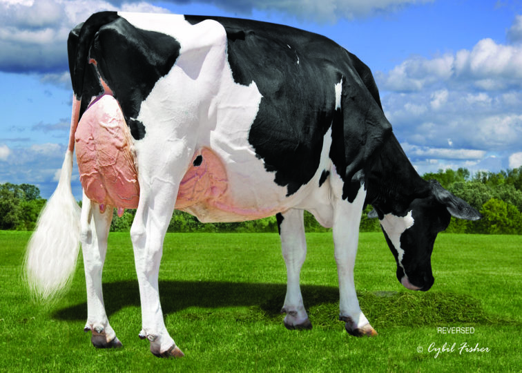 Kevetta Daniel Lexi, EX-92 | Daughter of 94HO17993 Daniel*RC | Owned by Oakfield Corners Dairy