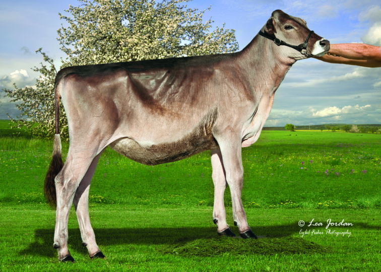 Opsal J Pretty As A Picture | Daughter of 94BS3818 Phantom | Owned by Becky Allen