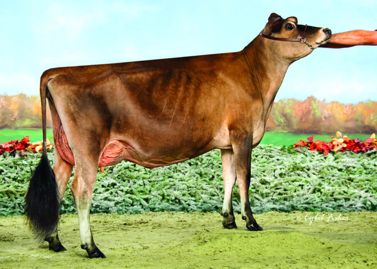 Milksource Gentry Mink-ET, 87% | Maternal Sister to 94JE4236 Metallica