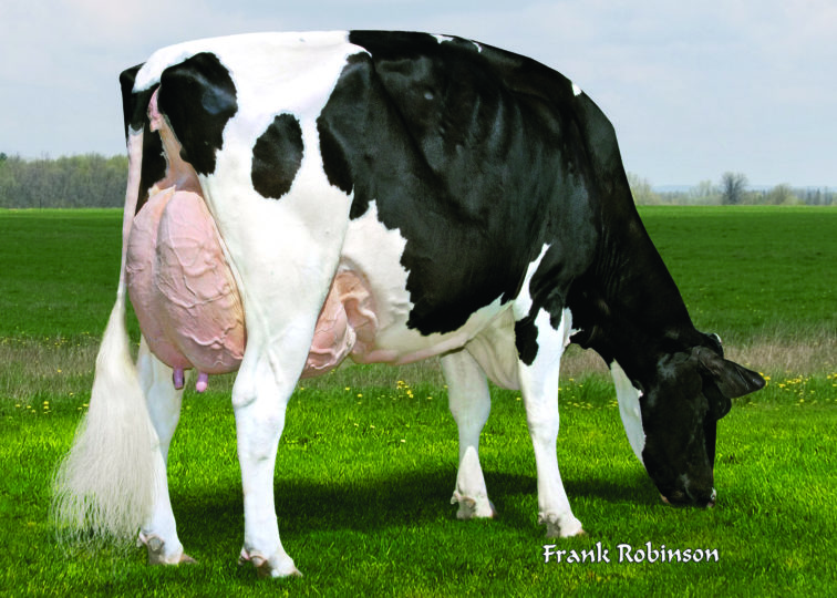 5th Dam of 94HO19837 Risque