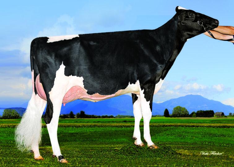 Prinse Blake Double Dutch, VG-88 | Daughter of 94HO17739 Blake | Owned by Prinse Farms Ltd
