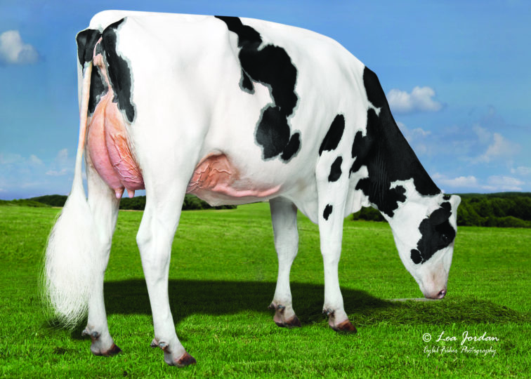 Kings-Ransom Montry Cans-ET, VG-89 | Dam of 94HO19123 Conclusion