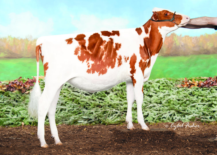 Tree-Hayven Daniel Diem-Red | Daughter of 94HO17993 Daniel*RC | Owned by Westcoast Holsteins