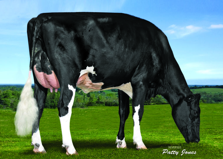 Liddleholme Lotto-ET, GP-83 | Daughter of 94HO18095 Bailey*RC | Owned by Avant-Garde Group