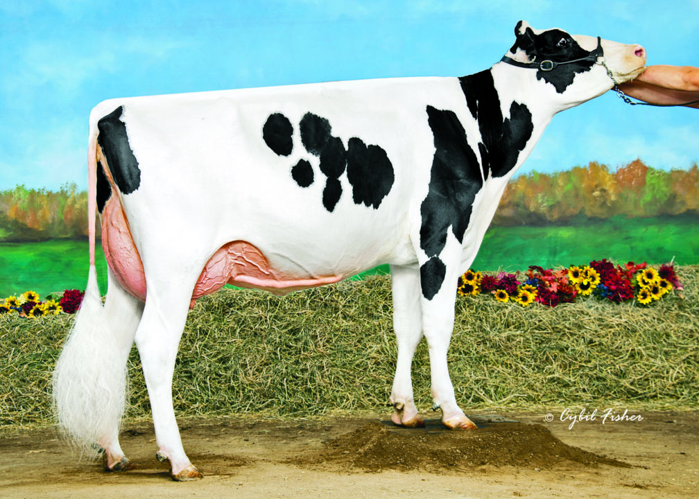 Crisdhome Hypnotic Bankston, VG-86 | Daughter of 94HO17973 Hypnotic*RC | Owned by Crisdhome Farm, Inc