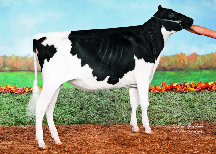 Ruti Denver Charlotte | Daughter of 94HO18518 Denver | Owned by Springhill