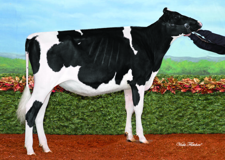 Belfast Denver Finger | Daughter of 94HO18518 Denver | Owned by Andre Dion