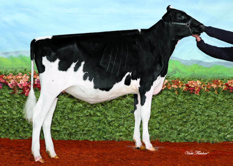 Cedarholme Coronado Violet | Daughter of 94HO18540 Coronado | Owned by Cedarholme Holsteins